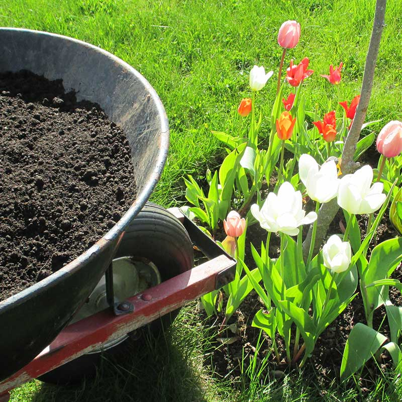 Read more about the article 5 Best Uses for Topsoil at your Home