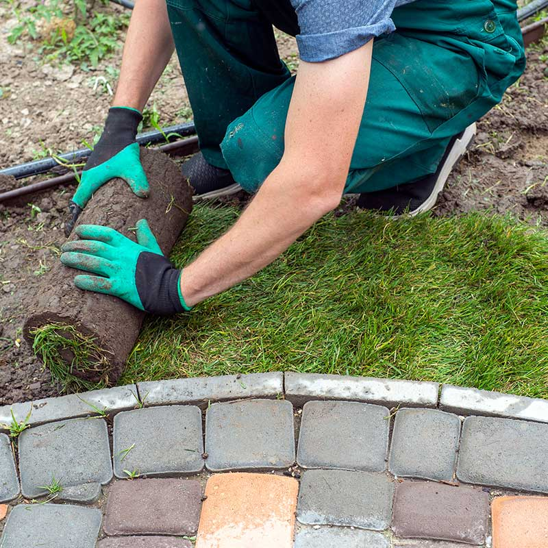 Read more about the article What are some Cheap Landscaping Hacks for your Yard?
